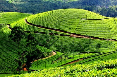 Top-Hill-Stations-in-Kerala-Munnar