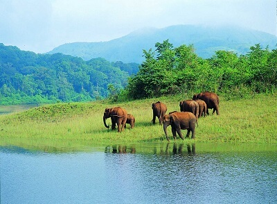 famous-hill-stations-in-Kerala-Thekkady