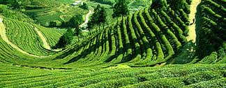 darjeeling-honeymoon-packages