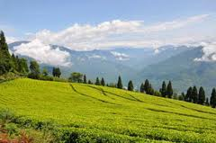 darjeeling-sight-seeing-images