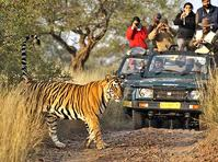 corbett-national-park-tour