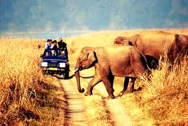 jim-corbett-tour-in-uttarakhand