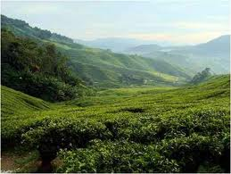 places-to-visit-in-coorg